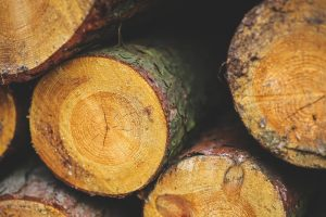 sustainable timber forestry