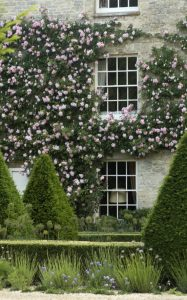 Climbing roses covering window sills