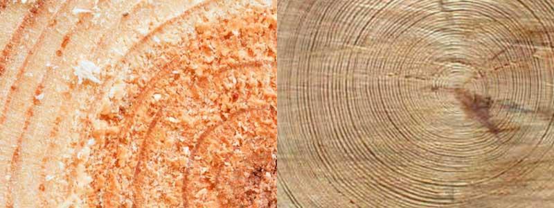 Wide-grain-vs-tight-grain-timber